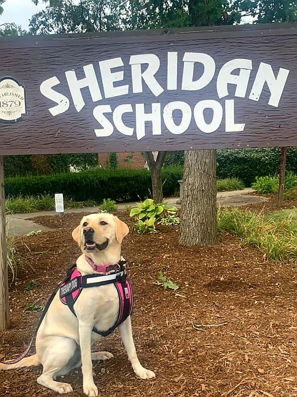 Casey: Sheridan's Therapy Dog
